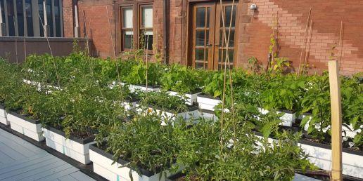 Rooftop biotop planters